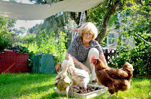Jeden Tag  frische Eier –  wie Hühner die Stadt erobern