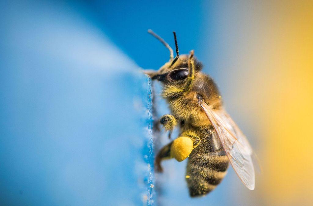 Die Berichterstattung über das Sterben der Bienen hat viele Menschen sensibilisiert und das Umweltbewusstsein gestärkt Foto: dpa