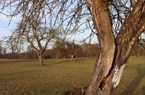 Im Garten Eden lichten sich die Baumreihen