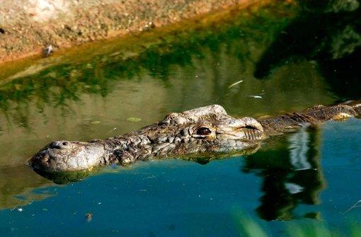 Übergewichtige Buchhalterin fällt auf Krokodil