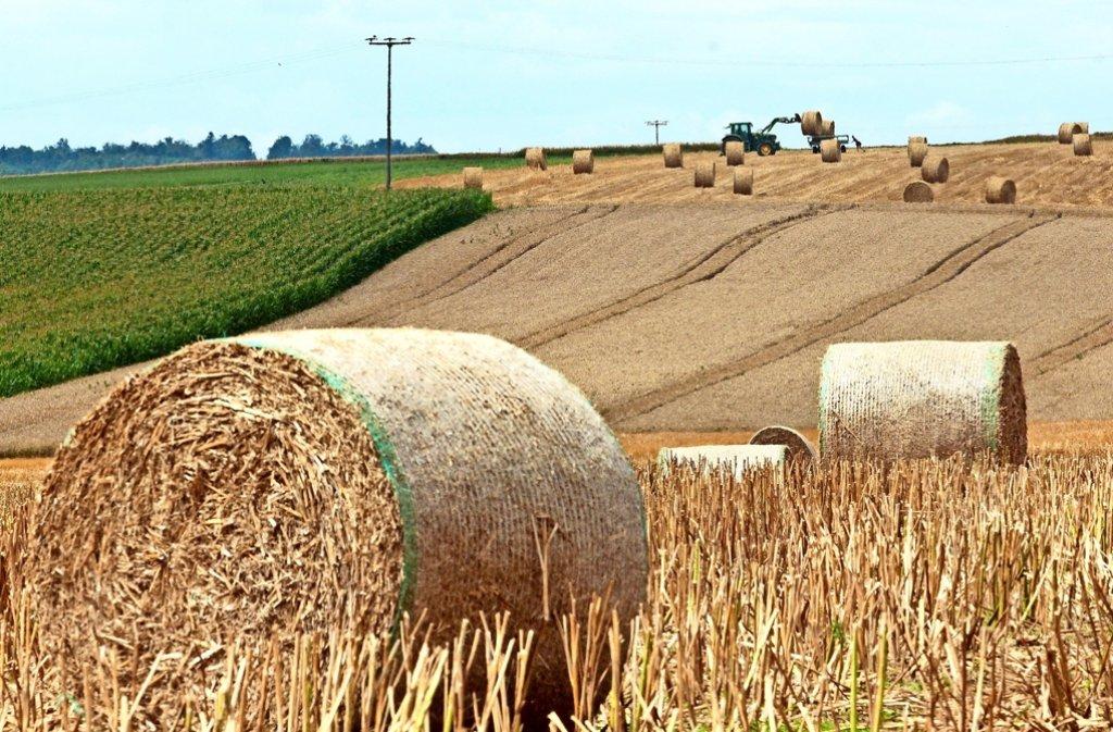 In den vergangenen Wochen war die Ernte in vollem Gang. So auch zwischen  dem Ihinger Hof  und Döffingen. Foto: factum/Granville