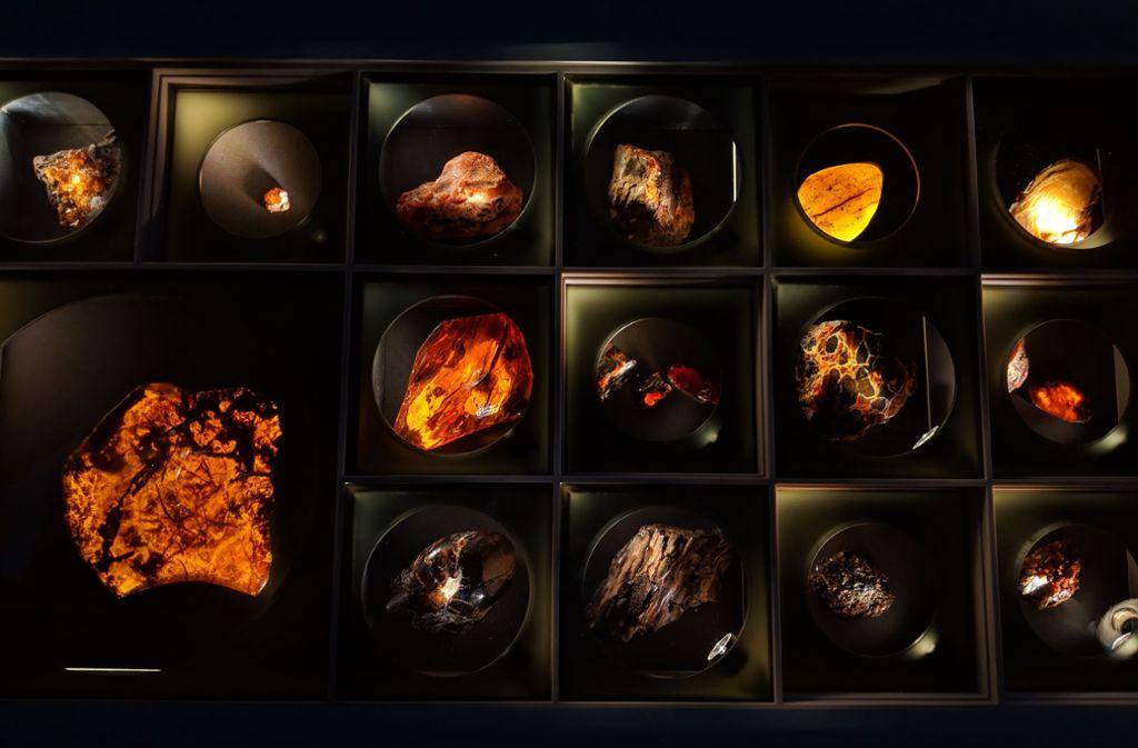Das Bernsteinkabinett bietet faszinierende Einblicke in die Insektenwelt der Urzeit. Foto: SMNS