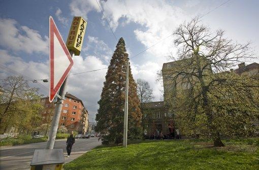 CDU fordert einen Weihnachtsbaum