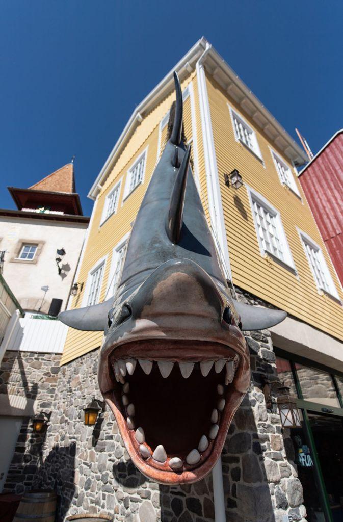 Ein Hai im Themenbereich Skandinavien Foto: dpa