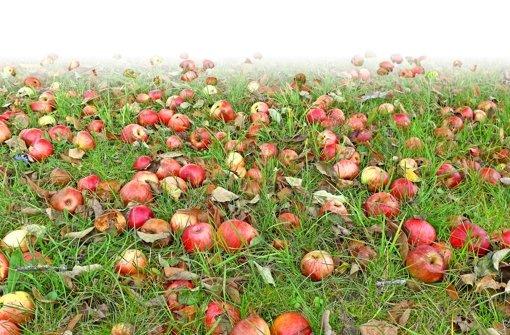 Äpfel und Birnen werden zu Müll
