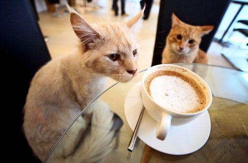 Schmusetiger sollen die Gäste beim Kaffee beruhigen