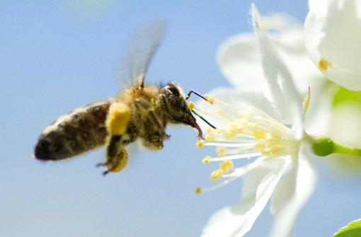 Ein Viertel der Bienen stirbt im Winter