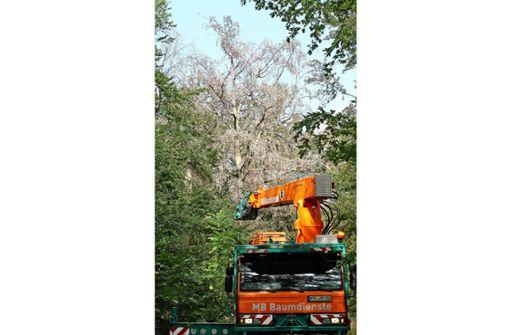 """Wald ist in einem  """"bedauerlichen Zustand"""""""