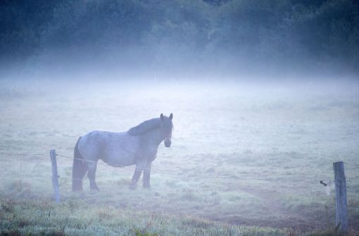 Herrenloses Pferd gibt Rätsel auf