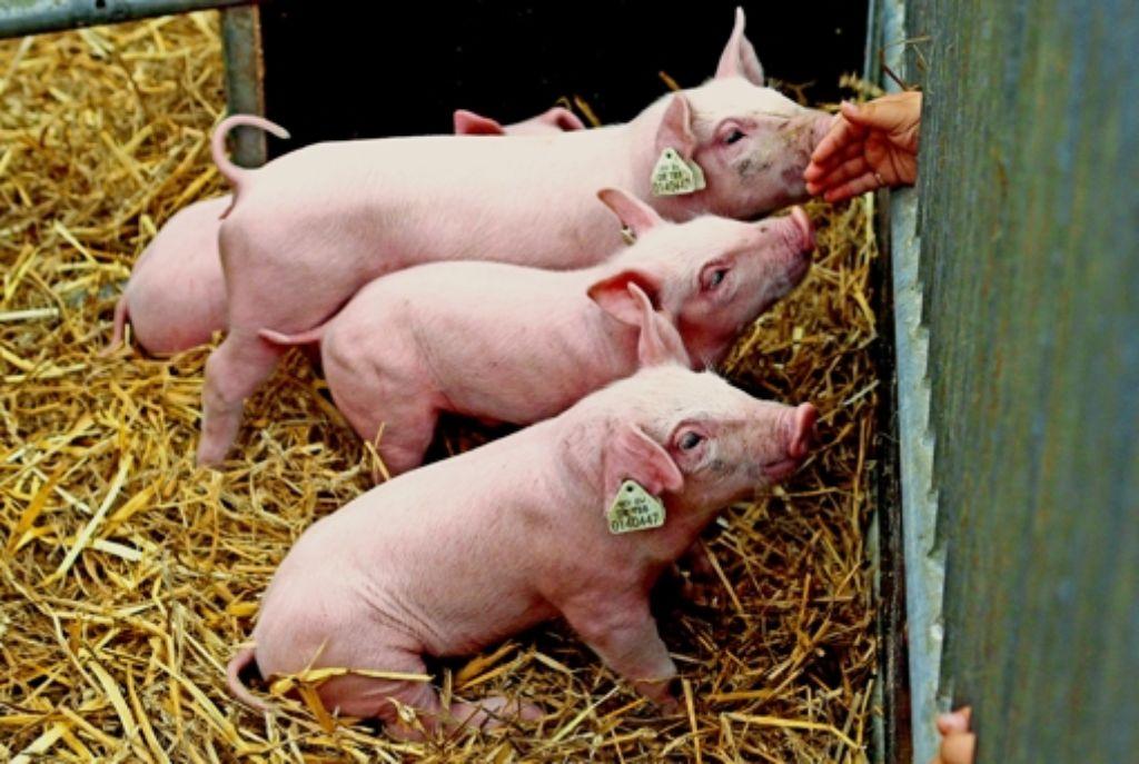 Der größte Streichelzoo im Land befindet sich derzeit auf dem Wasen. Auf der Agrarmesse werden auch die  neuesten PS-Boliden für  Landwirte  präsentiert. Foto: Simon Granville/factum