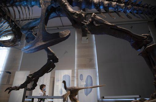 Deutscher Einbrecher schießt Selfies mit T-Rex-Skelett