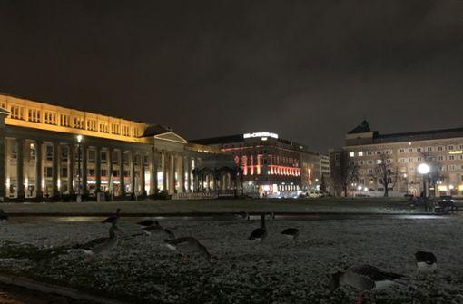 Wildvögel erobern wegen Corona Parkflächen in Stuttgart