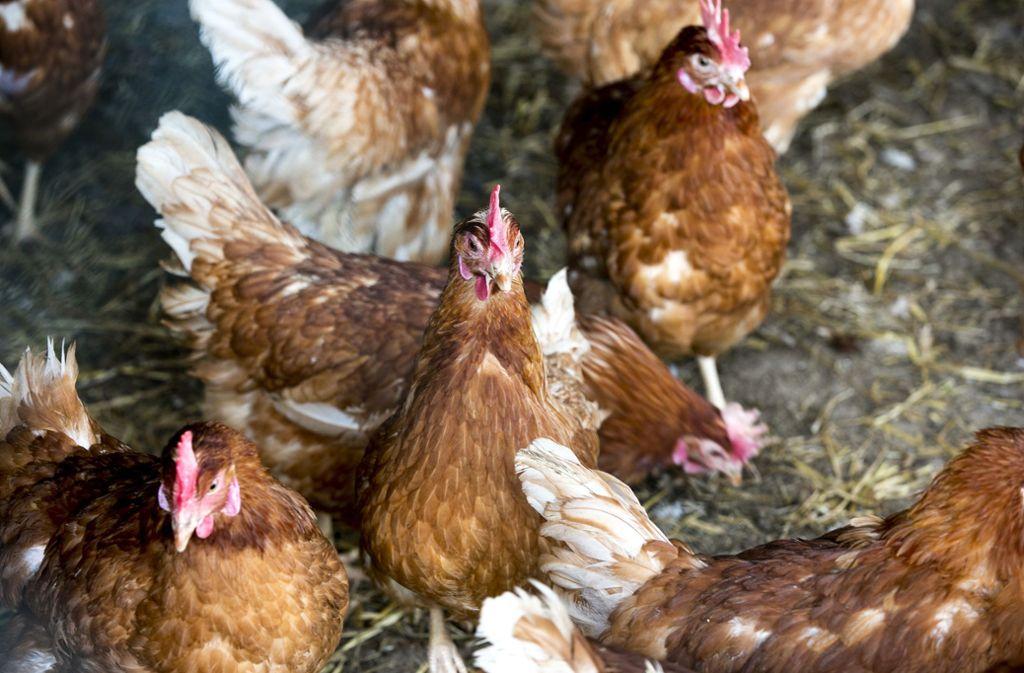 Der Beurener Haldenhof hat Eier aus Hardthausen (Kreis Heilbronn) in seinen Verpackungen verkauft. Das sei eine Irreführung der Verbraucher, urteilt das Oberlandesgericht Stuttgart. Foto:
