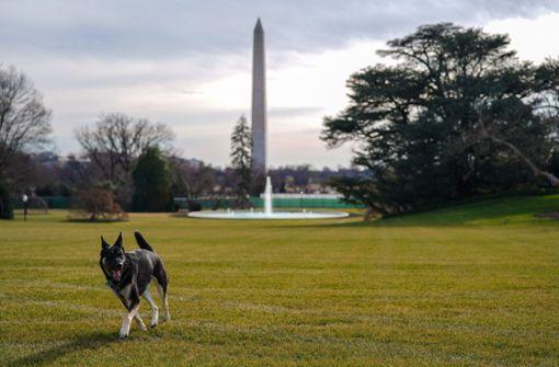 Das sind die neuen Hunde im Weißen Haus