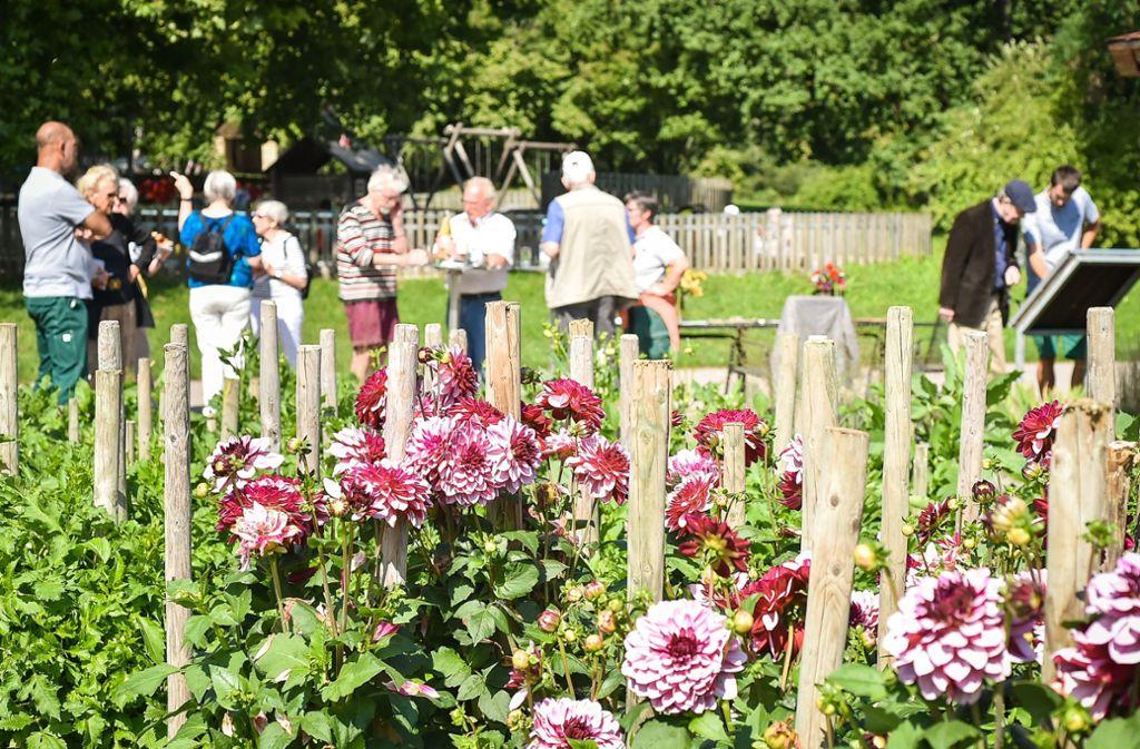 Besucher wählen bis Oktober die schönste Blume. Foto: Lichtgut / Ferdinando Iannone