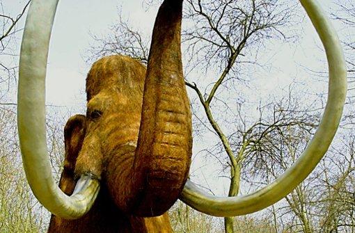 Klima und Jäger haben  Mammut und Co zugesetzt