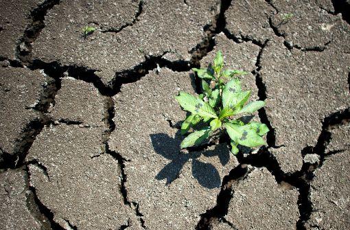 Städte sollen Klimawandel trotzen