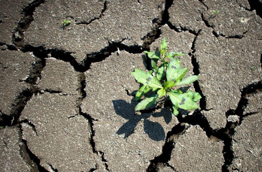 Dürreperioden sind auch im Südwesten spürbar – der Klimawandel ist schuld. Foto: dpa-Zentralbild