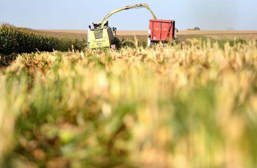 Landwirt findet Leiche in Maisfeld