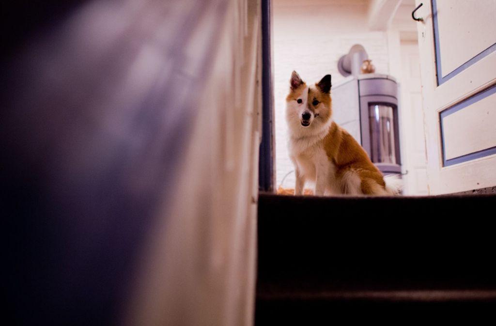 Viele Hunde in Norwegen sind erkrankt, einige bereits gestorben. (Symbolbild) Foto: dpa