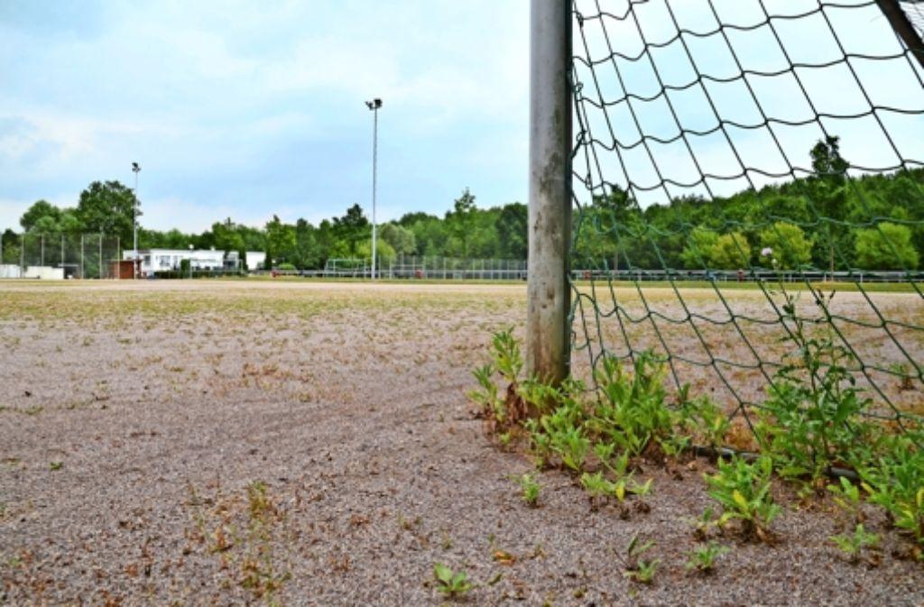 Der Hartplatz des 1. SV Fasanenhof  könnte ebenso wie die Plätze des TSV Jahn Büsnau und des Vereins Arces durch einen Kunstrasenplatz ersetzt werden. Foto: Sandra Hintermayr