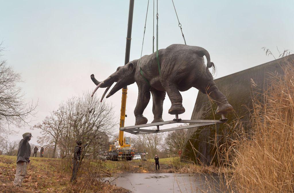Das Modell eines Urzeitelefanten wird mit einem Kran platziert.Foto: Lichtgut/Max Kovalenko Foto: