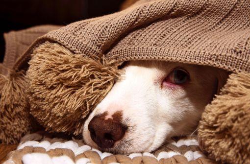 Warum Hunde Angsthasen sind