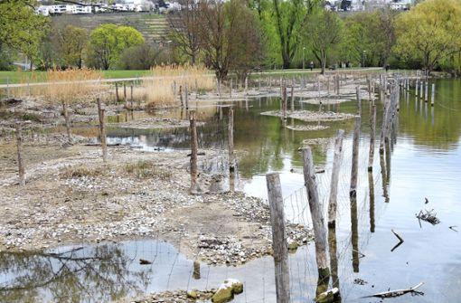 Sorge um den Fischbestand im Max-Eyth-See