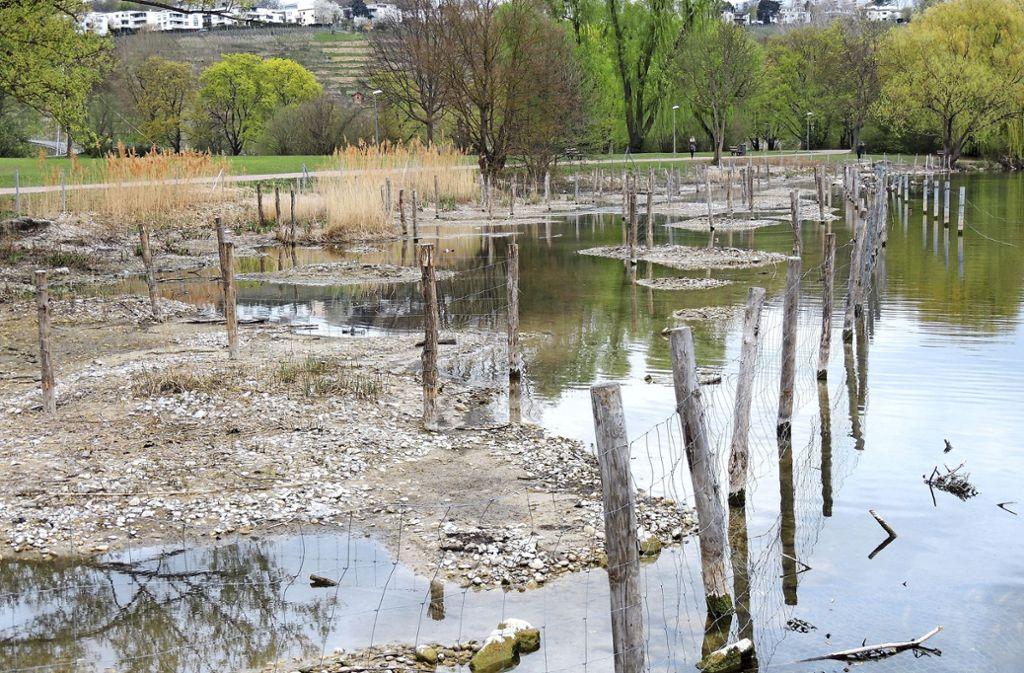 Die Renaturierungszone im Max-Eyth-See liegt derzeit in vielen Teilen trocken. Foto: Hans-Hermann Schock (z)