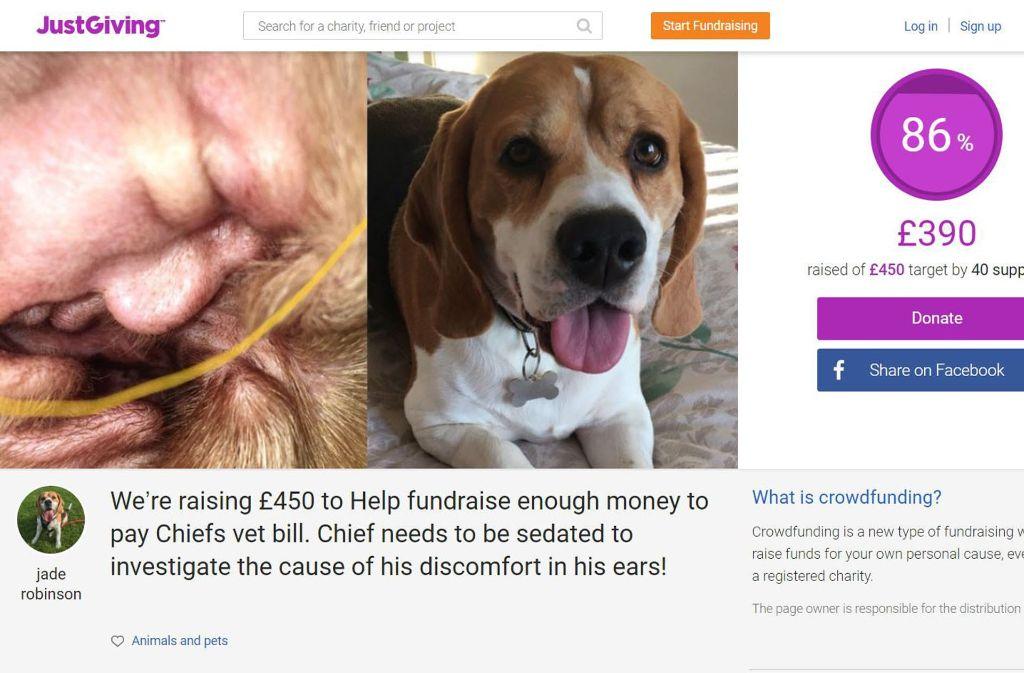 """Mit diesem Foto auf der Spenden-Sammel-Plattform """"Just Giving"""" fing der Internet-Hype um Donald Trump im Hundeohr an. Foto: Just Giving/Jade Robinson"""