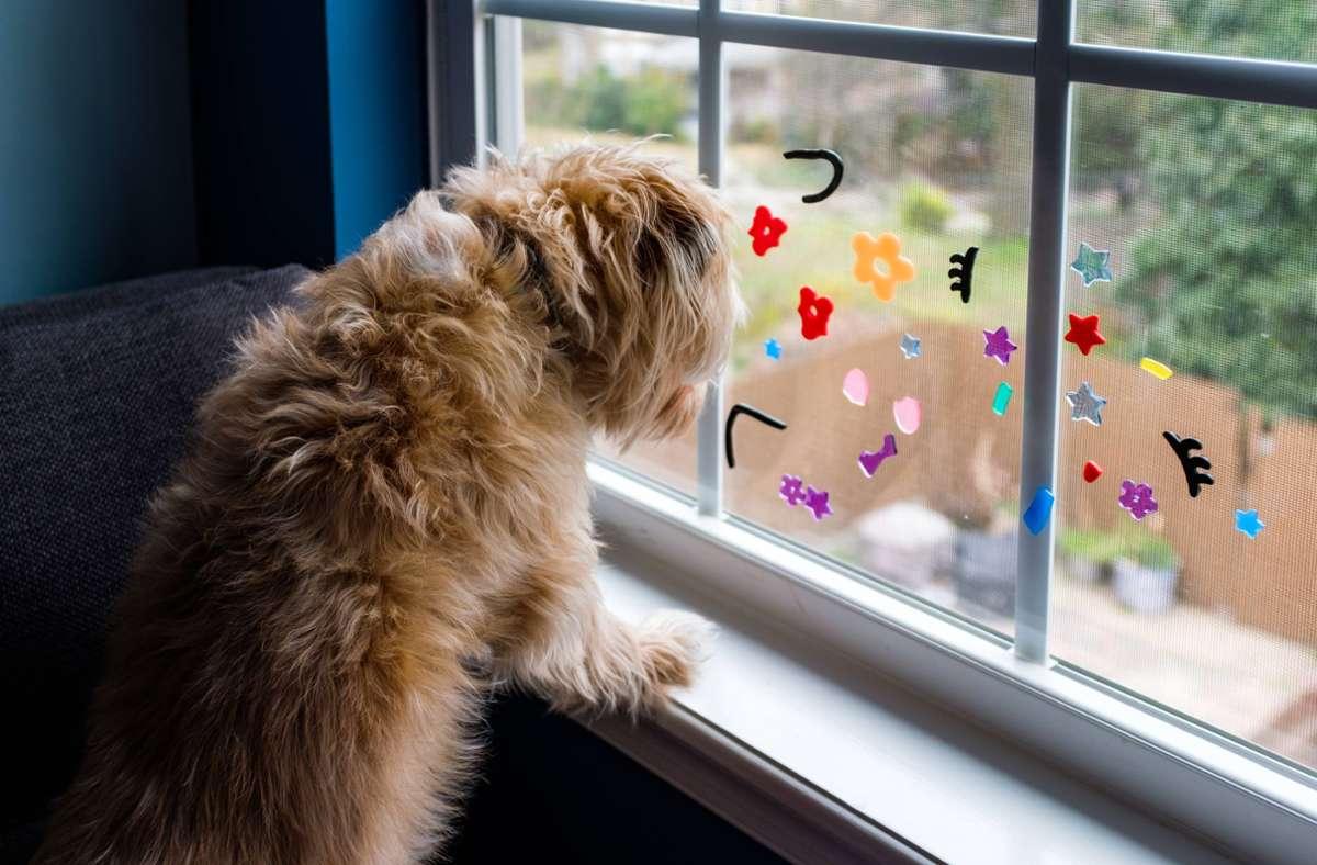 Demenz bei Haustieren kann zwar nicht geheilt, der Prozess der Krankheit aber verlangsamt werden. Foto: imago images//Cavan Images