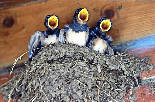 Aus dem Nest gefallen