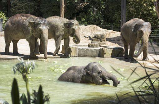 Viele Tiere verenden bei Hitzewelle in Australien