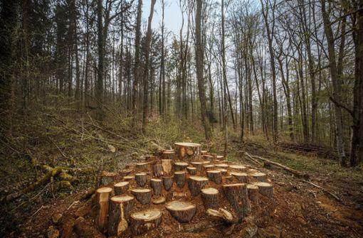 Larvenparadies inmitten von Totholz