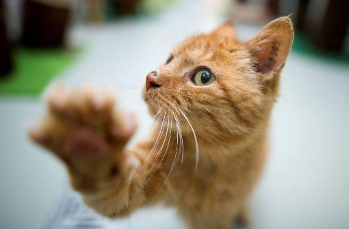 Katze fängt virtuelle Maus auf Tablet