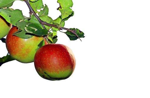 Kein Apfel soll auf der Wiese vergammeln
