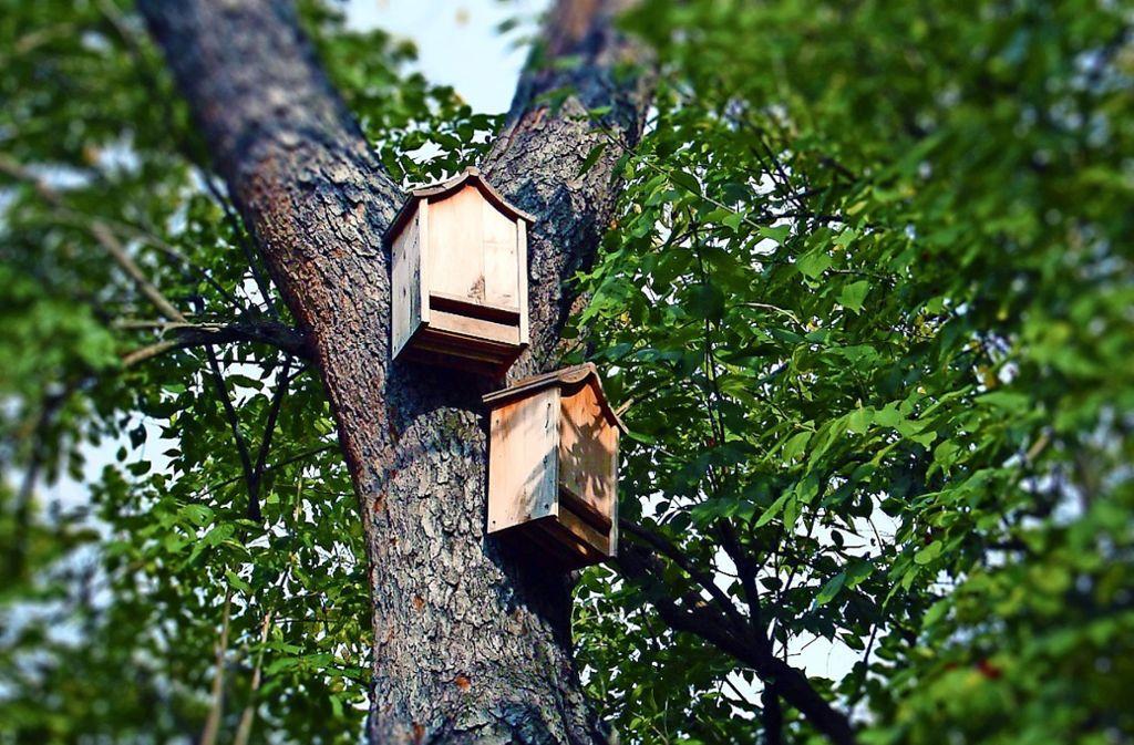 Kästen für Fledermäuse müssen in Heimsheim auch an die Häuser angebracht werden. Foto: Pixabay