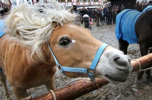 Schau Mal! Das  Pferdemarkts-Blog der LKZ startet...