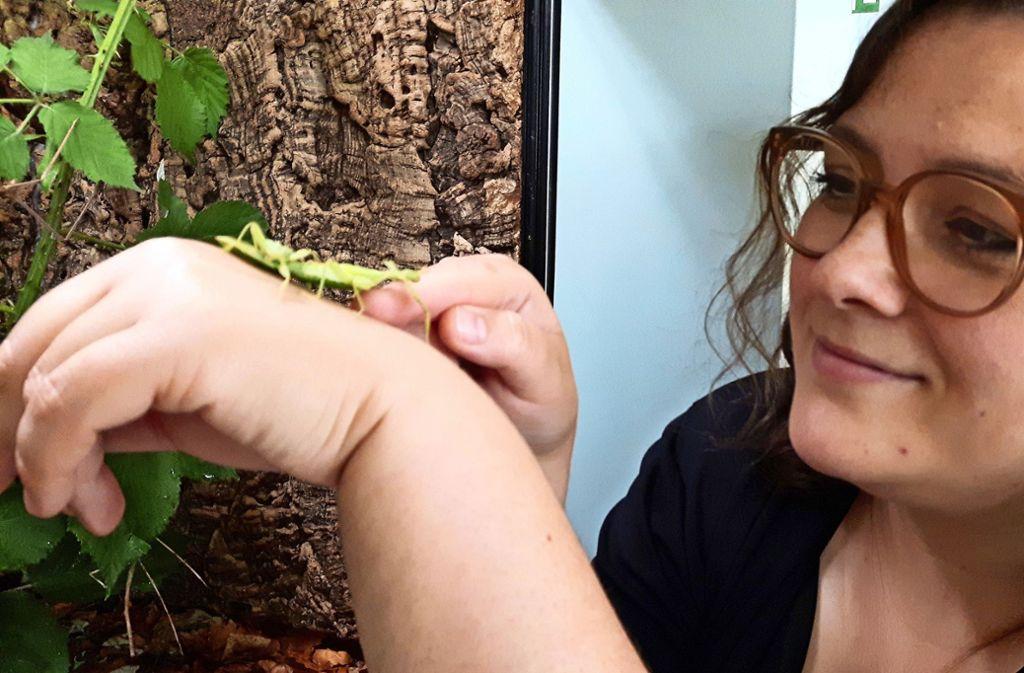 Auf Susanne Grubes Hand fühlen sich die beiden Gespenstschrecken wohl. Foto: Eva Funke