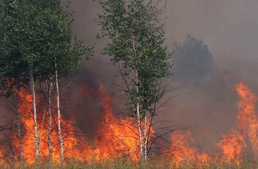 Jugendliche setzen Waldstück in Brand