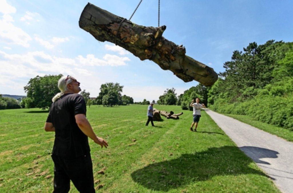 Präzisionsarbeit: Per Kran werden die fünf Tonnen schweren Baumstämme auf den Golfplatz gehievt. Michael Lange schaut fasziniert zu. Foto: factum/Granville
