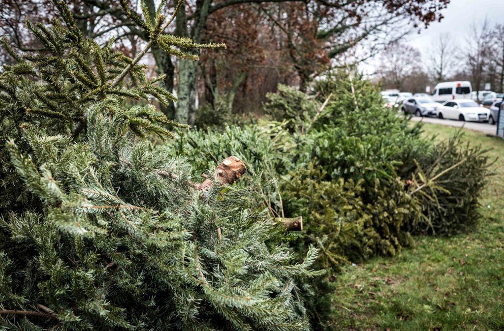 Die Weihnachtsbäume waren nicht mehr zu retten (Symbolbild). Foto: Lichtgut/Max Kovalenko