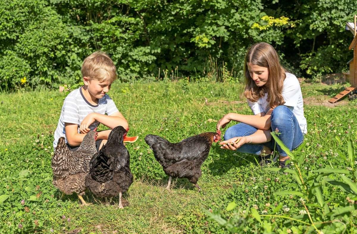 """Emil (8) und Anna (12) füttern ihre Hühner auch mal mit den Resten von Wassermelonen. """"Die lieben das"""", sagt Emil. Foto: Jürgen Bach/Jürgen Bach"""