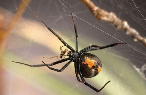 Vier Londoner Schulen wegen gefährlicher Spinnen geschlossen