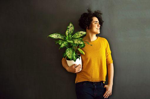 Mythen über Zimmerpflanzen – was ist dran?