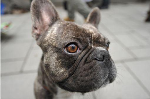 38 tote Hundewelpen im Flugzeug – Airline suspendiert Manager