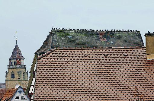 Tauben machen weiterhin große Probleme
