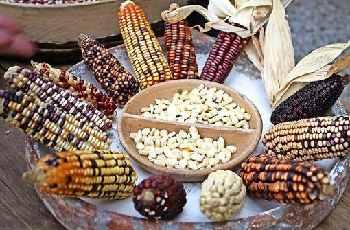 Saatgut wird zur Überlebensfrage