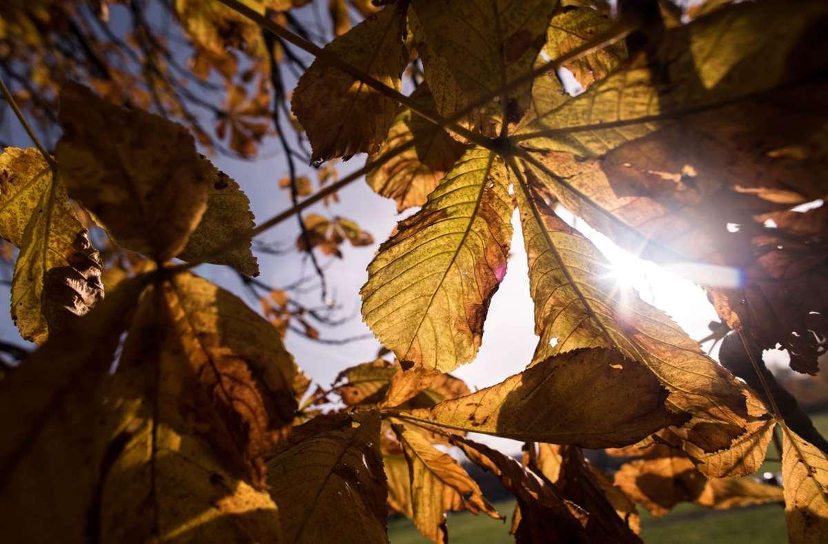 Dieser Herbst war zu warm und zu trocken. Foto: Lichtgut/Max Kovalenko