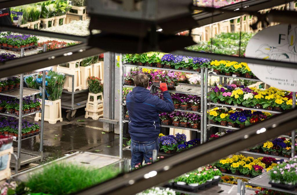 Auf dem Blumengroßmarkt kaufen gut 1000 Fachhändler ein. Foto: Lichtgut/Julian Rettig